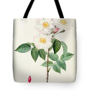 Rosa Damascena Subalba Tote Bag