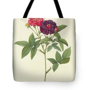 Rosa Gallica Purpurea Velutina Tote Bag