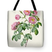 Rosa Mollissima Tote Bag by Claude Antoine Thory