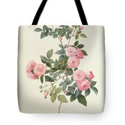 Rosa Multiflora Carnea Tote Bag by Pierre Joseph Redoute