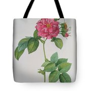 Rosa Turbinata Tote Bag by Pierre Joseph Redoute