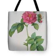 Rosa Turbinata Tote Bag by Pierre Joseph Redoute