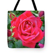 Rose And Buds - Double Knock Out Rose Tote Bag