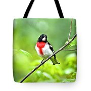 Rose-breasted Grosbeak 2 Tote Bag