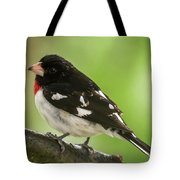 Rose-breasted Grosbeak Male Perched New Jersey  Tote Bag
