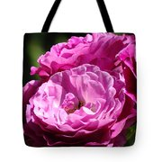 Rose Pink Purple Roses Flowers 1 Rose Garden Sunlit Flowers Baslee Troutman Tote Bag