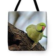 Rose-ringed Parakeet 04 Tote Bag