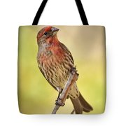 Rosy Finch Macro Tote Bag