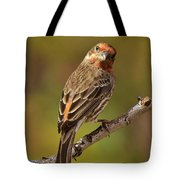 Rosy Finch Posing I Tote Bag