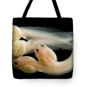 Rosy Ground Frog Tadpoles Tote Bag