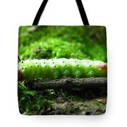 Rosy Maple Moth Caterpillar Tote Bag