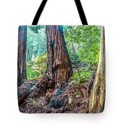 Rotten Redwoods Of Muir Woods Tote Bag