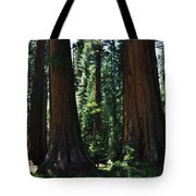 Round Meadow Sequoia Family Portrait Tote Bag