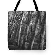 Row Trees Tote Bag