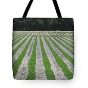 Rows Of Crops Tote Bag