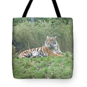 Royal Bengal Tiger Tote Bag