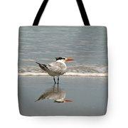 Royal Tern Reflection Tote Bag