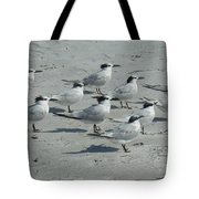 Royal Terns #3 Tote Bag