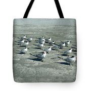 Royal Terns #4 Tote Bag