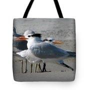 Royal Terns And Gulls Tote Bag