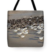 Royal Terns At Sebastian Inlet In Florida Tote Bag