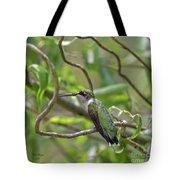 Ruby-throated Hummingbird - Female Tote Bag