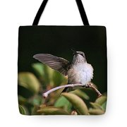 Ruby-throated Hummingbird - Juvenile Tote Bag