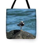 Ruddy Turnstone 2 Tote Bag