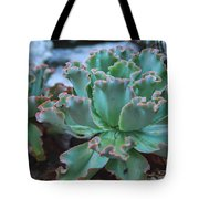 Echeveria Rosea  Tote Bag
