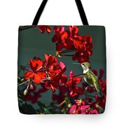 Rufus Humming Bird At Sunrise  Tote Bag
