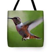 Rufus Hummingbird In Flight Tote Bag
