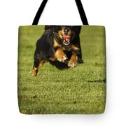 Run Dog Run Tote Bag