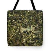 Rusty Crayfish At Night Tote Bag