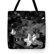 Sacred Lotus #2.    Black And White Tote Bag