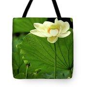 Sacred Lotus In Black Frame Tote Bag