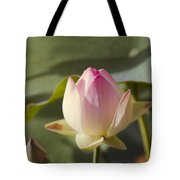 Sacred Lotus - Nelumbo Tote Bag