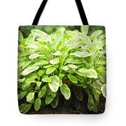 Sage Plant Tote Bag by Elena Elisseeva