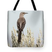 Sage Thrasher On Perch Tote Bag
