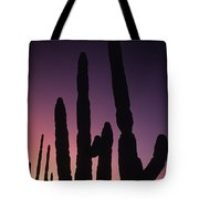 Saguaro Cactus Are Silhouetted By An Tote Bag