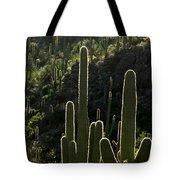 Saguaro Cactus Backlit Tote Bag