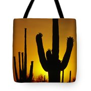 Saguaro Sunset Tote Bag by Sandra Bronstein