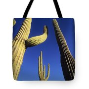 Saguaros Dwaft One Another Tote Bag