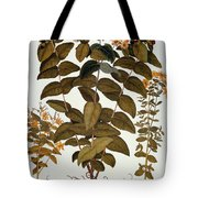 Saint-johns-wort, 1613 Tote Bag