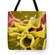 Salmonella Bacteria, Sem Tote Bag by Science Source