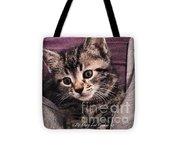 Sam  The Kitten Tote Bag