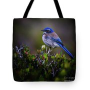 San Diego Bluebird Tote Bag