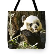 San Diego Panda Tote Bag