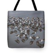 Sanderlings On The Shore Tote Bag