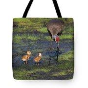 Sandhill Crane And Babies Tote Bag