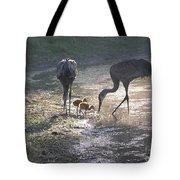 Sandhill Crane Family In Morning Sunshine Tote Bag by Carol Groenen